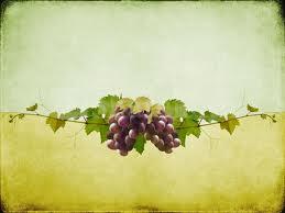 Vine-Branches